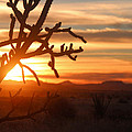 Valerie Loop - Cholla Sunset