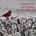 Lydia Holly - Christmas Blessings