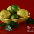 Inspired Nature Photography By Shelley Myke - Citrus Passion