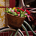 Scott Hill - Classic Bike with Tulips