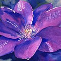 Sharon Mick - Clematis Gipsy Queen in...