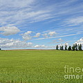 Photography Moments - Sandi - Clouds Over the Field -...
