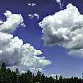 Bob Johnston - Clouds - Ponderosa Pines...