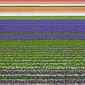 Kiril Stanchev - Colorful fields of...