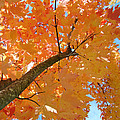 Baslee Troutman Fine Photography Art - Colorful Trees Art...
