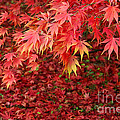 Rosemary Calvert - Colourful autumn leaves