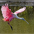Dawn Currie - Coming in for a Landing
