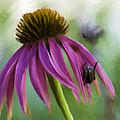 Renee Skiba - Coneflower with beetle