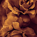 Jennie Marie Schell - Copper Rose Floral...