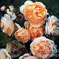 RC deWinter - Copperblush
