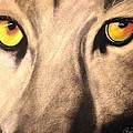 Renee Michelle Wenker - Cougar Eyes
