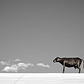 Mary Lee Dereske - Cow On A Hot Tin Roof  ...