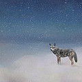 Jai Johnson - Coyote In Winter