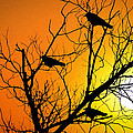 Bill Cannon - Crows at Sunset