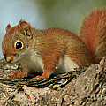 Inspired Nature Photography By Shelley Myke - Curious by Nature Red...