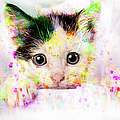 Ronel Broderick - Cute Kitten with Water...