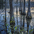 Debra and Dave Vanderlaan - Cypress Swamp