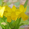 Luther   Fine Art - Daffodils Announcing...