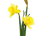 Reflective Moments  Photography and Digital Art Images - Daffs