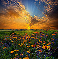 Phil Koch - Daisy Dream