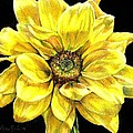Shana Rowe - Dancing Yellow Daisy