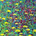 Vanja Zogovic - Dandelions and spring...