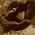 Christie Morgans - Dark Chocolate Rose