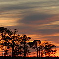 Terry Cobb - December Sunset in...