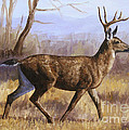 Crista Forest - Deer Painting - Trotting...