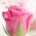 HJBH Photography - Delicate Pink Rose