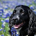 Kristina Deane - Dog in the Wildflowers