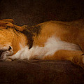 Loriental Photography - Dog Posing #02