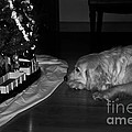 Frank J Casella - Dog with Christmas Train