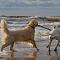 Gynt   - Dogs friendship by the...