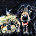 Daliana Pacuraru - Dogs - pencil drawing