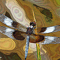 Tom Janca - Dragonfly Waiting For A...