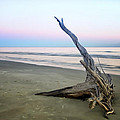 Phill  Doherty - Driftwood at Dusk