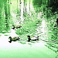 Eddie Eastwood - Ducks at Chase Lake in...