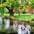 Susan Savad - Ducks on Pond