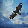 Jordan Blackstone - Eagle Art - Like An Eagle