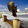 Bruce Nutting - Eagle at the Beach