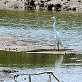 Terry Cobb - Egret at Low Tide