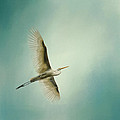 Jai Johnson - Egret Overhead