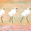 Jennie Breeze - Egrets Flamingoed