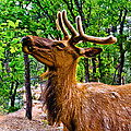 Bob and Nadine Johnston - Elk Browsing in the...