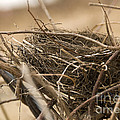 Ted Guhl - Empty Nest in a Dry...