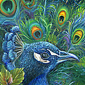 Kathy Brecheisen - Enticing Peacock
