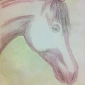 Abbie Shores - Equine Head in pencils