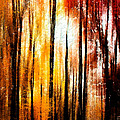 Tom Gari Gallery-Three-Photography - Fall Abstract
