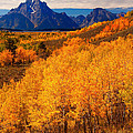 Aaron Whittemore - Fall in the Tetons